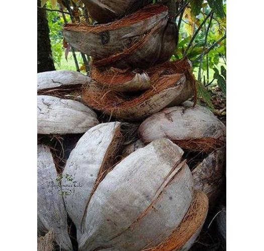 Traditional Tahitian monoi with flower, 100% natural - TIKI MONOI AO 120ML