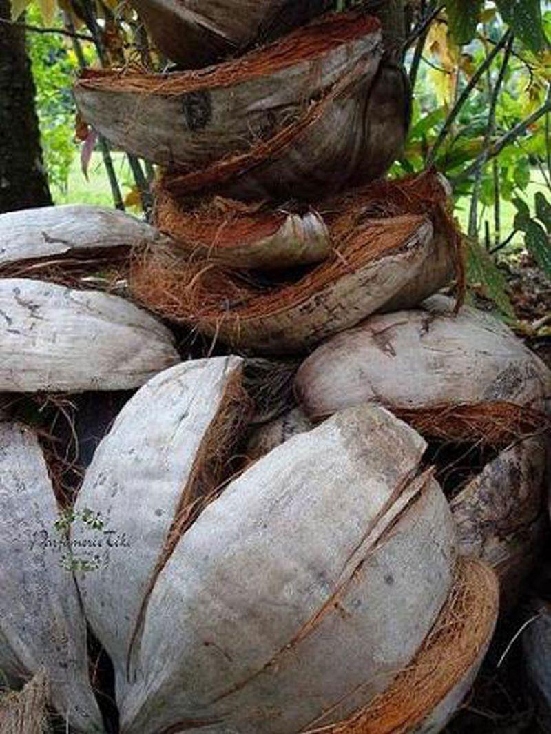 Traditionell Tahitian monoi med blommor, 100% naturligt - TIKI MONOI AO 120ML