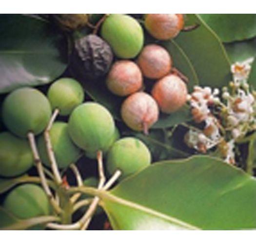 Vegetabilsk sæbe der er fremstillet med tamanuolie og Monoi fra Tahiti - TIKI SAVON TAMANU 130grs